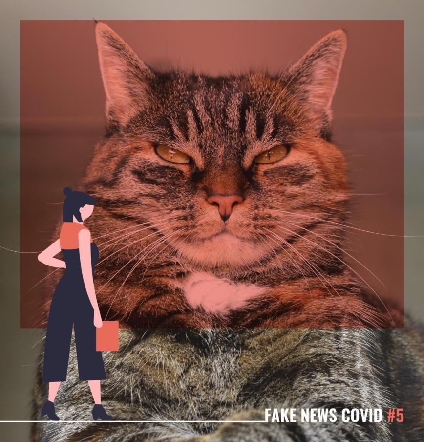 Fake News Covid-19 #5 – Animaux domestiques